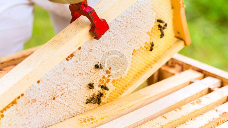 Tutorial: Beekeeping Plans, Supplies & Ideas
