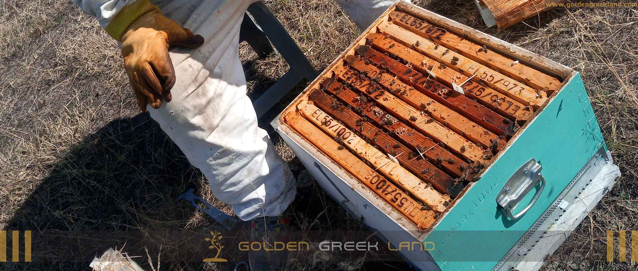 Golden honey - The beekeeper and the bees in the honeycomb.